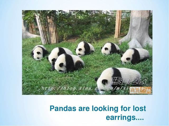 Pandas are looking for lost earrings....