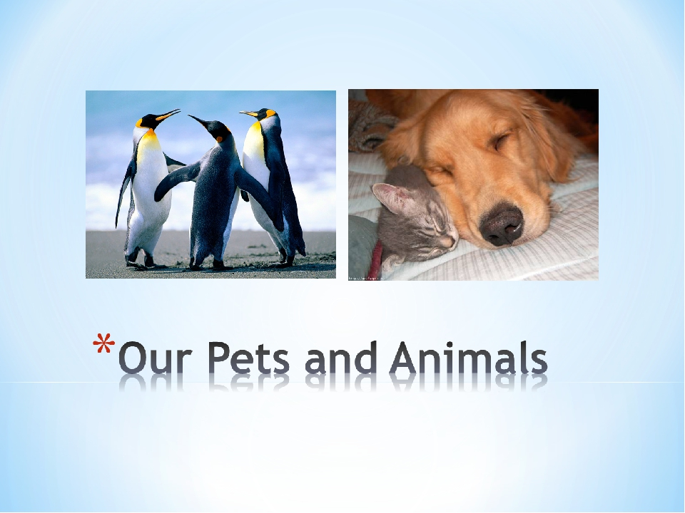 our pet animals Coping with the impending loss of a pet is one of the most difficult experiences a pet parent will face whether your furry friend is approaching his golden years or has been diagnosed with a terminal illness, it's important to calmly guide the end-of-life experience and minimize any discomfort or distress.
