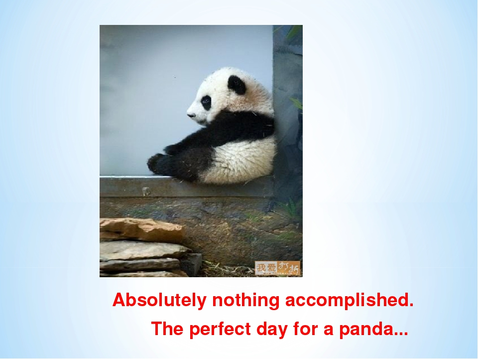 Absolutely nothing accomplished. The perfect day for a panda...