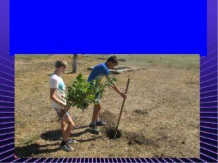 Чтоб школу нам озеленить, Нужно деревья посадить. А мы работы не боимся, Раб