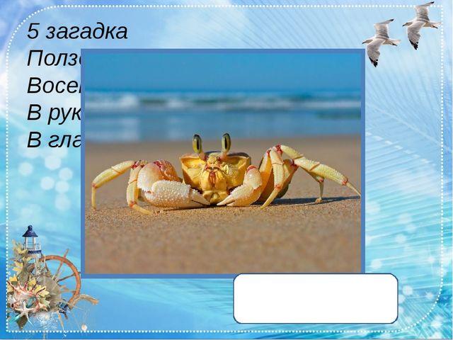 5 загадка Ползет в море паук - Восемь ног, пара рук. В руках клешни, В глазах...