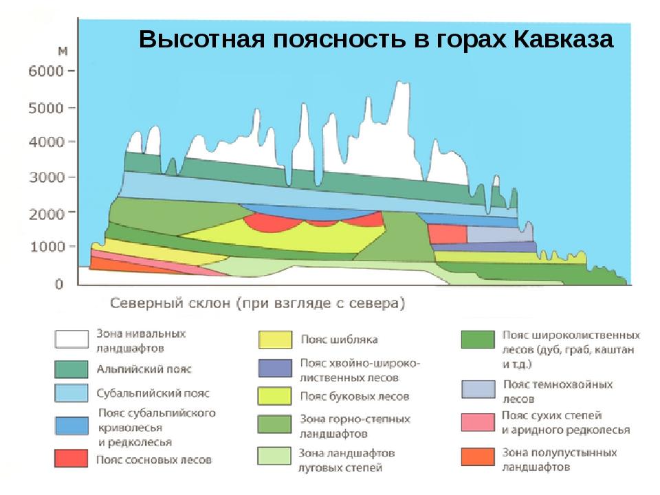 Высотная поясность в горах Кавказа