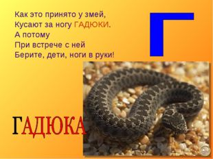 Как это принято у змей, Кусают за ногу ГАДЮКИ. А потому При встрече с ней Бер