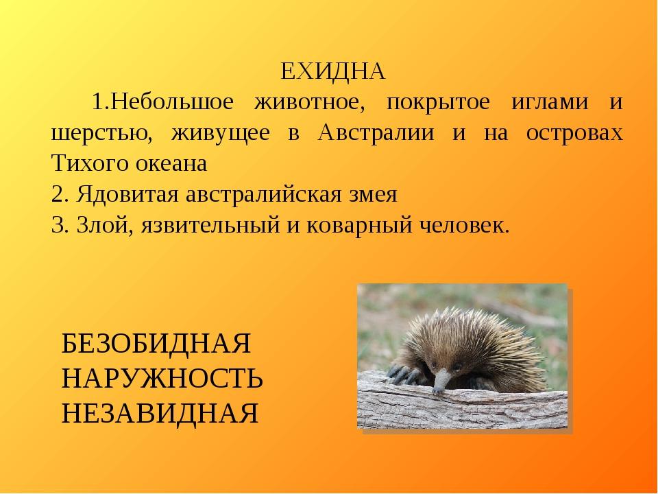 ЕХИДНА 1.Небольшое животное, покрытое иглами и шерстью, живущее в Австралии и...