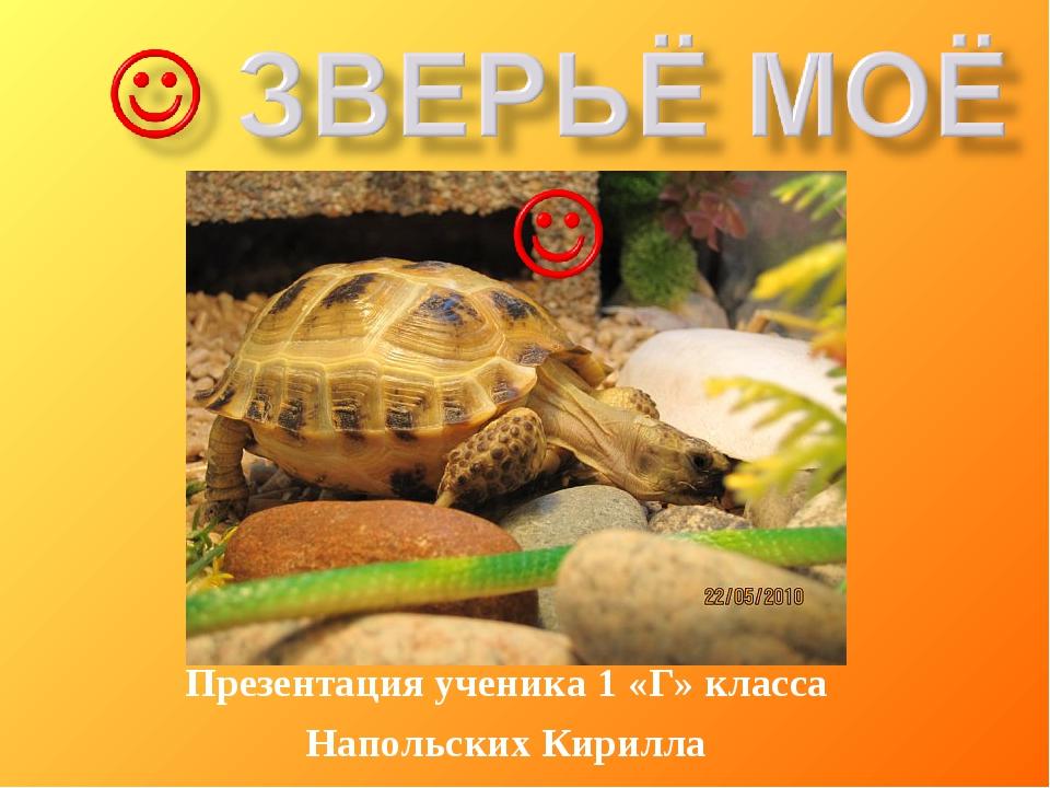 Презентация ученика 1 «Г» класса Напольских Кирилла