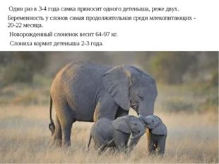 Один раз в 3-4 года самка приносит одного детеныша, реже двух. Новорожденный