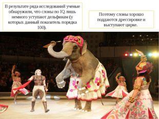 В результате ряда исследований ученые обнаружили, что слоны по IQ лишь немног