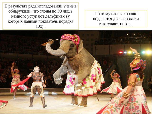 В результате ряда исследований ученые обнаружили, что слоны по IQ лишь немног...