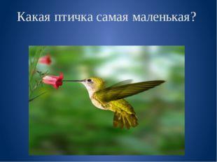 Какая птичка самая маленькая?