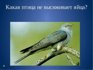 Какая птица не высиживает яйца?