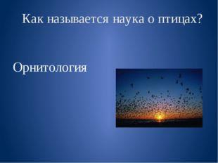 Как называется наука о птицах? Орнитология