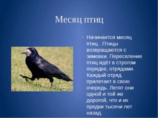 Месяц птиц Начинается месяц птиц . Птицы возвращаются с зимовки. Переселение