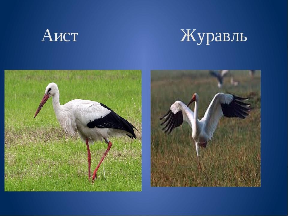 Аист Журавль