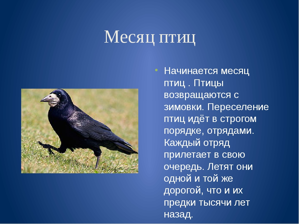 Месяц птиц Начинается месяц птиц . Птицы возвращаются с зимовки. Переселение...