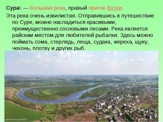 Сура́—большая река, правыйприток Волги. Эта река очень извилистая. Отправи...