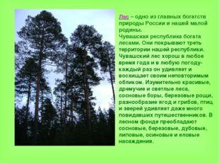 Лес – одно из главных богатств природы России и нашей малой родины. Чувашская