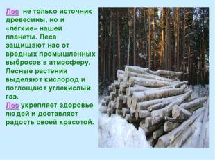 Лес не только источник древесины, но и «лёгкие» нашей планеты. Леса защищают