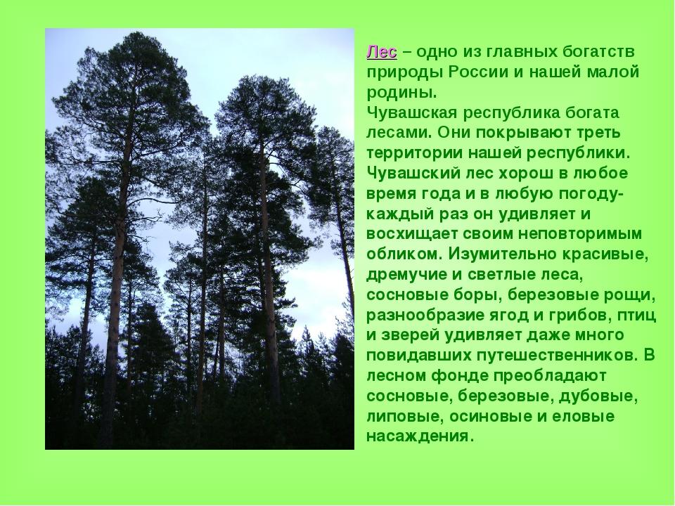 Лес – одно из главных богатств природы России и нашей малой родины. Чувашская...