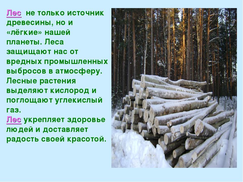 Лес не только источник древесины, но и «лёгкие» нашей планеты. Леса защищают...