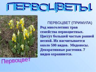 ПЕРВОЦВЕТ (ПРИМУЛА) Род многолетних трав семейства первоцветных. Цветут боль