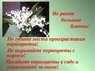 Не рвите большие букеты! Не губите места произрастания первоцветов! Не вырыв
