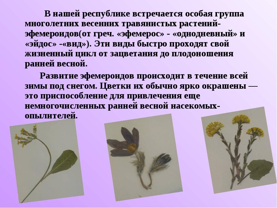 В нашей республике встречается особая группа многолетних весенних травянисты...
