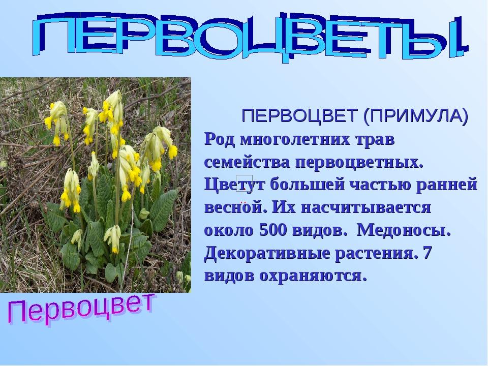 ПЕРВОЦВЕТ (ПРИМУЛА) Род многолетних трав семейства первоцветных. Цветут боль...