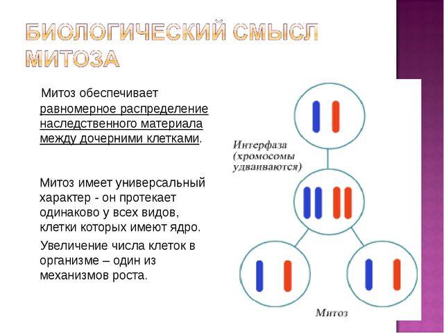 Митоз обеспечивает равномерное распределение наследственного материала между...
