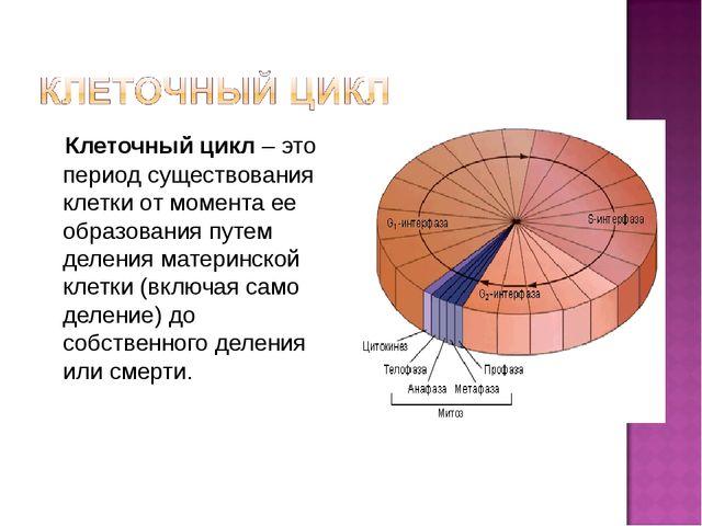 Клеточный цикл – это период существования клетки от момента ее образования п...