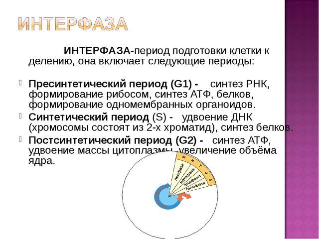 ИНТЕРФАЗА-период подготовки клетки к делению, она включает следующие периоды...
