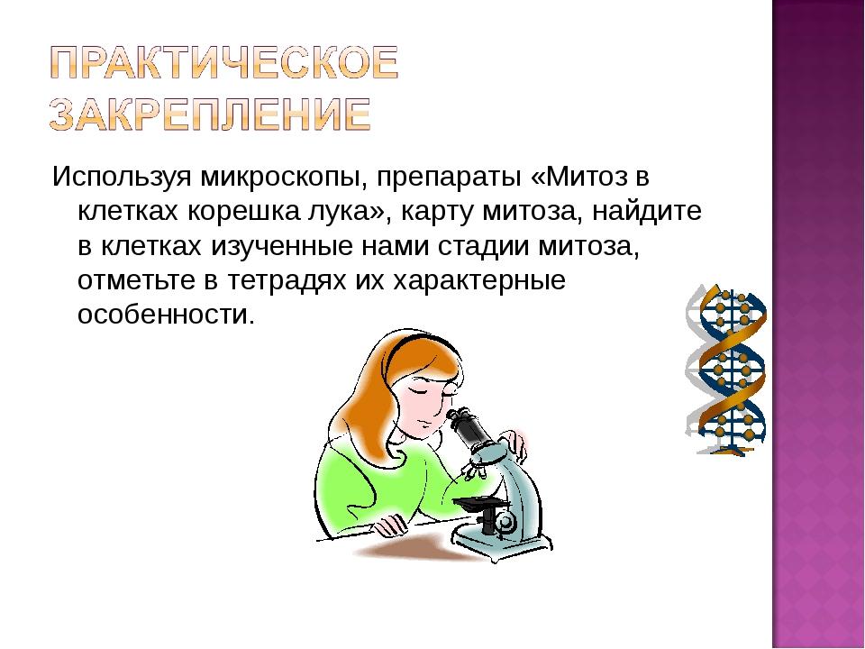 Используя микроскопы, препараты «Митоз в клетках корешка лука», карту митоза,...
