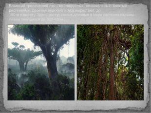 Влажный тропический лес - многоярусный, вечнозеленый, богатый растениями. Дер