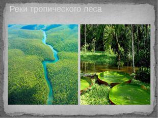Реки тропического леса