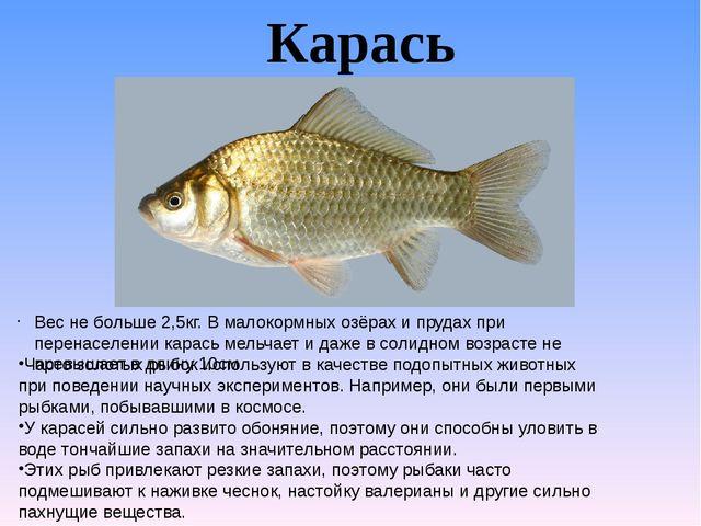 Карась Часто золотых рыбок используют в качестве подопытных животных при пове...