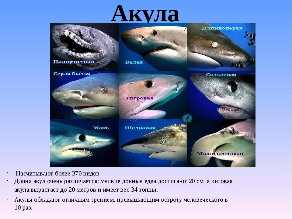 Акула Насчитывают более 370 видов Длина акул очень различается: мелкие донные...