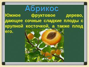 Южное фруктовое дерево, дающее сочные сладкие плоды с крупной косточкой, а та