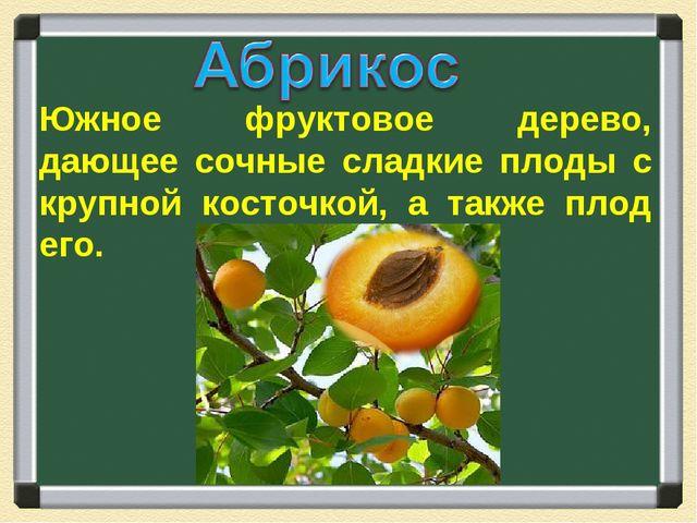 Южное фруктовое дерево, дающее сочные сладкие плоды с крупной косточкой, а та...