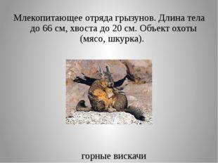 Млекопитающее отряда грызунов. Длина тела до 66 см, хвоста до 20 см. Объект о