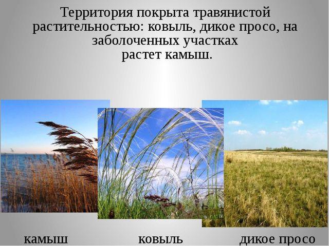Территория покрыта травянистой растительностью: ковыль, дикое просо, на забол...
