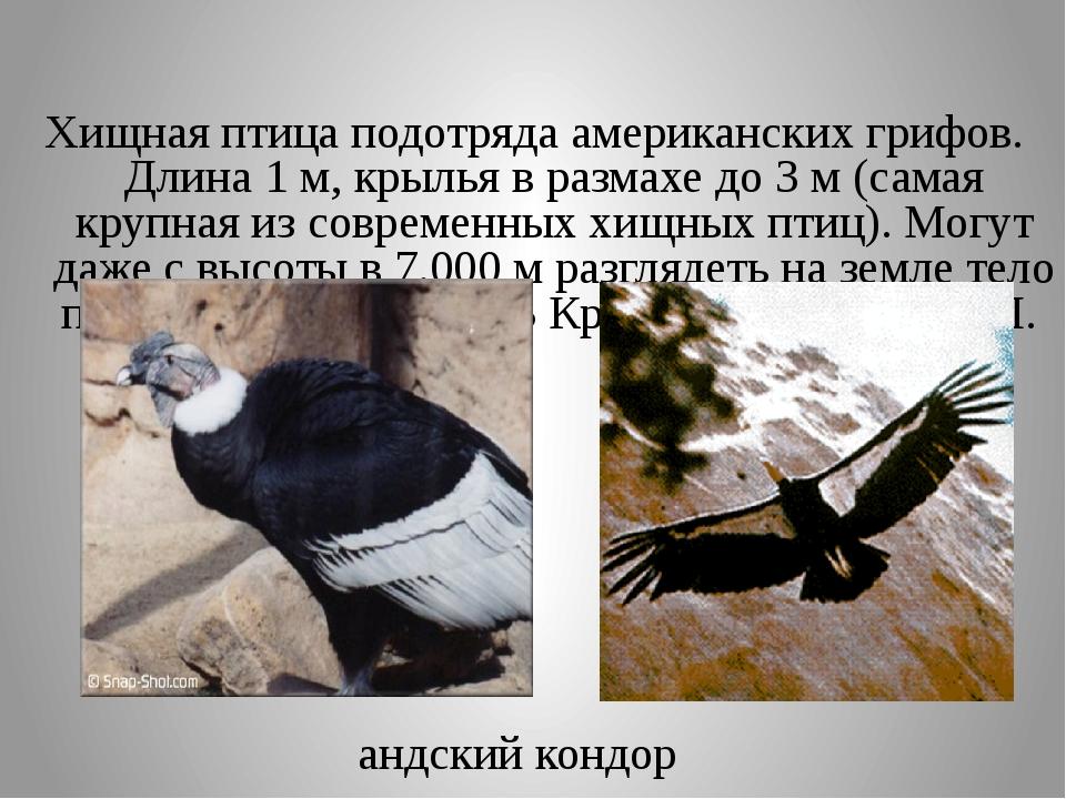 Хищная птица подотряда американских грифов. Длина 1 м, крылья в размахе до 3...