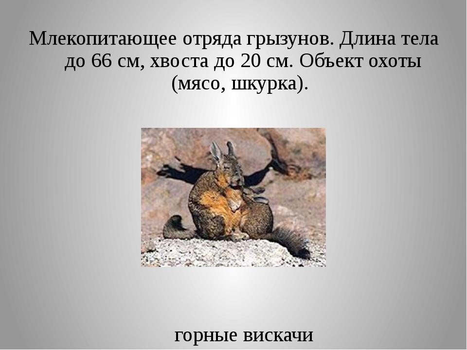 Млекопитающее отряда грызунов. Длина тела до 66 см, хвоста до 20 см. Объект о...