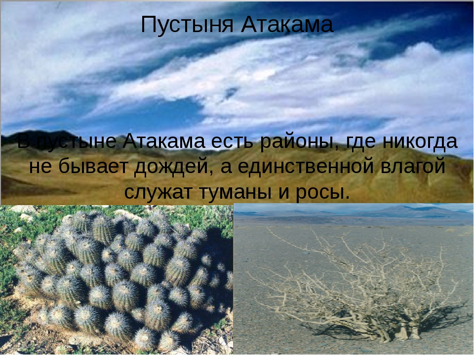 Пустыня Атакама В пустыне Атакама есть районы, где никогда не бывает дождей,...