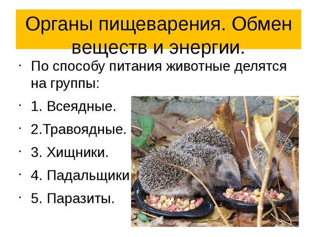 Органы пищеварения. Обмен веществ и энергии. По способу питания животные деля...
