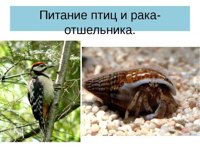 Питание птиц и рака-отшельника.