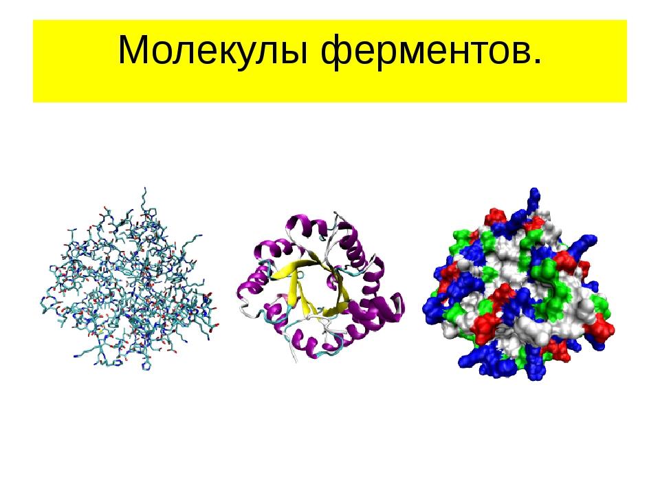 Молекулы ферментов.