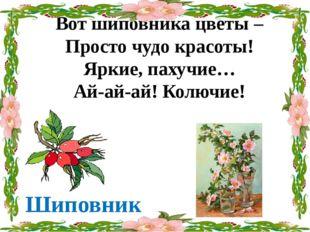 Вот шиповника цветы – Просто чудо красоты! Яркие, пахучие… Ай-ай-ай! Колючие!