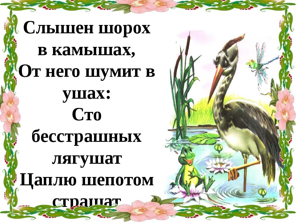 Слышен шорох в камышах, От него шумит в ушах: Сто бесстрашных лягушат Цаплю ш...