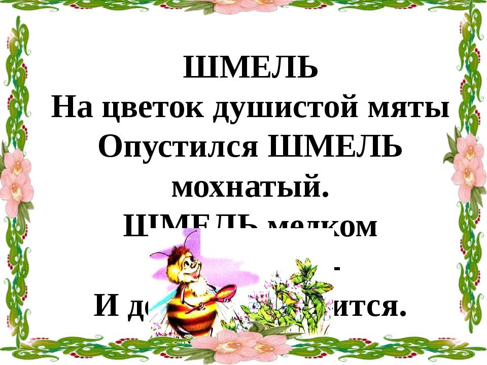 ШМЕЛЬ На цветок душистой мяты Опустился ШМЕЛЬ мохнатый. ШМЕЛЬ медком заправит...