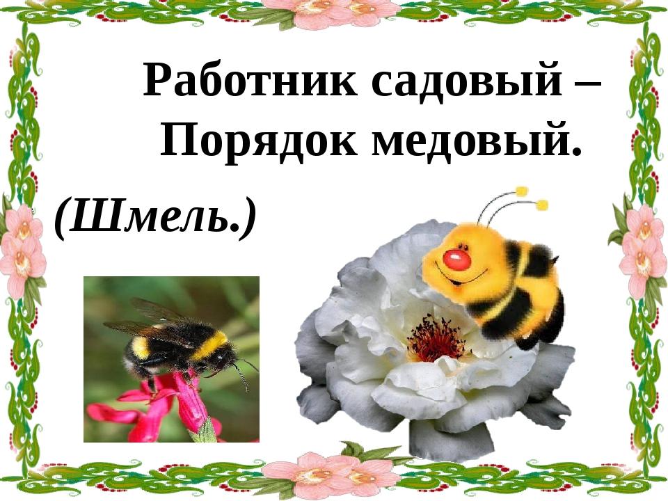 Работник садовый – Порядок медовый. (Шмель.)