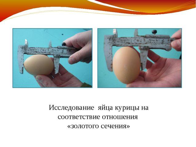 Исследование яйца курицы на соответствие отношения «золотого сечения»